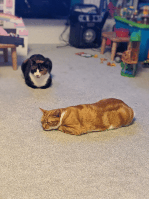 For Christmas we bought our cats an £80 cat tree, £30 pair of baskets and spent £20 on new radiator beds. Since Christmas day they have both chosen to sleep in the middle of the living room floor.: For Christmas we bought our cats an £80 cat tree, £30 pair of baskets and spent £20 on new radiator beds. Since Christmas day they have both chosen to sleep in the middle of the living room floor.