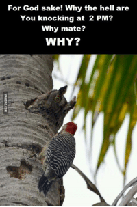 We all have a neighbor like him... http://9gag.com/gag/aNn8ZN0?ref=fbp: For God sake! Why the hell are  You knocking at 2 PM?  Why mate?  WHY? We all have a neighbor like him... http://9gag.com/gag/aNn8ZN0?ref=fbp