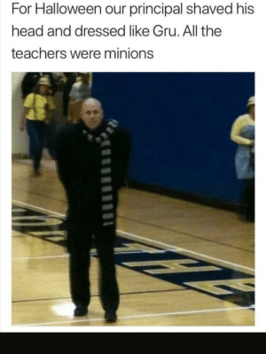 Gru's penis is 14 inches long: For Halloween our principal shaved his  head and dressed like Gru. All the  teachers were minions Gru's penis is 14 inches long