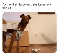 Elf, Halloween, and Memes: For her first Halloween, she became a  free elf. @x__social_butterfly_x is my favorite animal account on IG! (Pic: reddit u-cbick)