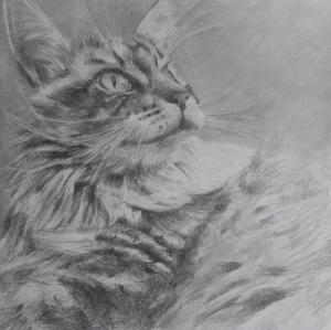 [FOR HIRE] Pet portrait artist! Send a photo and I will mail you a graphite drawing. Comment if you are interested & message me for prices!: [FOR HIRE] Pet portrait artist! Send a photo and I will mail you a graphite drawing. Comment if you are interested & message me for prices!