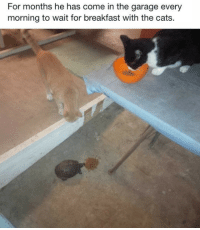 <p>Feeding the Neighborhood Strays.</p>: For months he has come in the garage every  morning to wait for breakfast with the cats. <p>Feeding the Neighborhood Strays.</p>