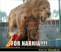 Narnia, For, and For Narnia: FOR NARNIA!!!  ICANHASCHEE2EURGER COMR  Shared with Memedroid