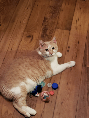 For National Cat Day, I present Hobbes!: For National Cat Day, I present Hobbes!