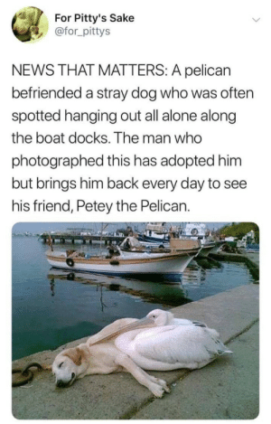 Docks: For Pitty's Sake  @for_pittys  NEWS THAT MATTERS: A pelican  befriended a stray dog who was often  spotted hanging out all alone along  the boat docks. The man who  photographed this has adopted him  but brings him back every day to see  his friend, Petey the Pelican.