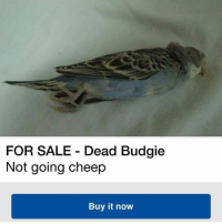 Dank Memes, Sales, and Budgie: FOR SALE Dead Budgie  Not going cheep  Buy it now Amphetameme pt. III