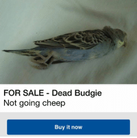 Dank, 🤖, and Budgie: FOR SALE Dead Budgie  Not going cheep  Buy it now