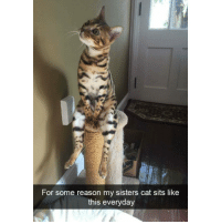 @x__antisocial_butterfly__x is hilarious: For some reason my sisters cat sits like  this everyday @x__antisocial_butterfly__x is hilarious
