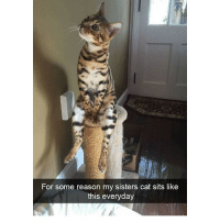Memes, 🤖, and Cat: For some reason my sisters cat sits like  this everyday @hilarious.ted posts the cutest memes!!!