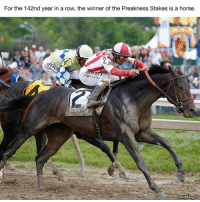 Such an incredible streak. Preakness: For the 142nd year in a row, the winner of the Preakness Stakes is a horse.  LOCBSSports Such an incredible streak. Preakness