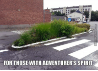 Memes, 🤖, and Pavement: FOR THOSE WITH ADVENTURERS SPIRIT Because walking on pavement is too mainstream.