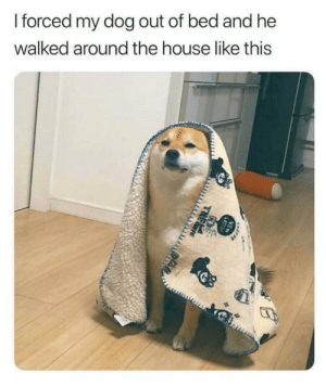 House, Dog, and The House: forced my dog out of bed and he  walked around the house like this Walking around the house