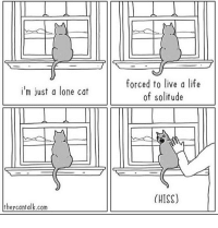 (artist: @theycantalkcomics) me when my friends want to hang out: forced to live a life  of solitude  i'm just a lone cat  (HISS)  theycantalk.com (artist: @theycantalkcomics) me when my friends want to hang out
