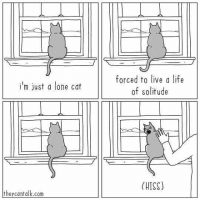 I have nobody - cr: @theycantalkcomics - comics: forced to live a life  of solitude  i'm just a lone cat  (HISS)  theycantalk.com I have nobody - cr: @theycantalkcomics - comics