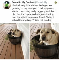 Confused, Memes, and Today: Forest In My Garden @ForeslnMy...  I had a lovely little kitchen herb garden  growing on my front porch. All my plants  started becoming really raggedy and then  died but the thyme and oregano draping  over the side. I was so confused. Today i  solved the mystery. This is not my dog. Post 1901: this happens somethymes
