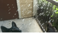 forestwildflower: anybodyandsomebody:   bangedbysatan:  bangedbysatan:  Tumblr would enjoy this I thought  I love reading how my video of my dogs cured people's depression. They're so wholesome.   Dog 1: Mesmerized, pure, wholesome Dog 2: Absolute madman   I've watched this 5 times and each time is better than the last  : forestwildflower: anybodyandsomebody:   bangedbysatan:  bangedbysatan:  Tumblr would enjoy this I thought  I love reading how my video of my dogs cured people's depression. They're so wholesome.   Dog 1: Mesmerized, pure, wholesome Dog 2: Absolute madman   I've watched this 5 times and each time is better than the last