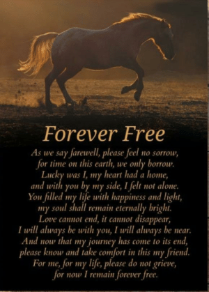 I don't know where to put this. Please note this is not my poem I just want to help those who are grieving a lost pet like I did not to long ago: Forever Free  As we say farewell, please feel no sorrow,  for time on this earth, we only borrow.  Lucky was I, my heart had a home,  and with you by my side, I felt not alone.  You filled my life with happiness and light,  soul shall remain eternally bright.  my  Love cannot end, it cannot disappear,  I will always be with you, I will always be near.  And now that my journey has come to its end,  please know and take comfort in this my friend.  For me, for my life, please do not grieve,  for now I remain forever free.  ту I don't know where to put this. Please note this is not my poem I just want to help those who are grieving a lost pet like I did not to long ago