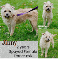 Dogs, Memes, and Puppies: FOREVER  HUMANE  SOCIETY  JInny  2 years  Spayed Female  Terrier mix All dogs/puppies in our shelter can be viewed here.  Any dog not being held as a stray is available for immediate, same-day adoption! Adoption applications are reviewed on site. Please share our dogs and help get them out of the shelter as quickly as possible!  **PLEASE NOTE**  Placing an application on a dog featured in this album does NOT hold the dog for you.  All available dogs are available to be met and adopted same day if already altered.  If not altered, the dog can be met and paid for in order to hold the dog for you.  Thank you for your understanding!