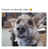 "Try Commenting ""doggy"" 1 letter at a time without being interrupted if you want 😂😂DOUBLE TAP 💕😂FOLLOW @codmemenation for more!☺👌TAG A FRIEND 👍😂 ➖➖➖➖➖➖➖➖➖➖➖➖➖➖➖➖➖✔Credit:unknown Follow my backup @cod_meme_nation 😎 Animal page🐶@animal.angel ➖➖➖➖➖➖➖➖➖➖➖➖➖➖➖ ❤Leave a Like❤ 🗨Or a comment💬 😷hate-self promotion=delete😷 stay classy 🎩and have a nice day 😀👍 ➖➖➖➖➖➖➖➖➖➖➖➖➖➖➖ ⏬ Hasgtags (ignore) ⏬ cod callofduty callofdutymemes kontrolfreeks gfuel game gaming gamingmeme gamer fazerain gamer scuf meme memes dank dankmemes battlefield battlefield1 battlefield4 gta gtav gta5 gtavonline cod4 comedy savage humor dog cat dogs cats: Forever my favorite video Try Commenting ""doggy"" 1 letter at a time without being interrupted if you want 😂😂DOUBLE TAP 💕😂FOLLOW @codmemenation for more!☺👌TAG A FRIEND 👍😂 ➖➖➖➖➖➖➖➖➖➖➖➖➖➖➖➖➖✔Credit:unknown Follow my backup @cod_meme_nation 😎 Animal page🐶@animal.angel ➖➖➖➖➖➖➖➖➖➖➖➖➖➖➖ ❤Leave a Like❤ 🗨Or a comment💬 😷hate-self promotion=delete😷 stay classy 🎩and have a nice day 😀👍 ➖➖➖➖➖➖➖➖➖➖➖➖➖➖➖ ⏬ Hasgtags (ignore) ⏬ cod callofduty callofdutymemes kontrolfreeks gfuel game gaming gamingmeme gamer fazerain gamer scuf meme memes dank dankmemes battlefield battlefield1 battlefield4 gta gtav gta5 gtavonline cod4 comedy savage humor dog cat dogs cats"