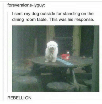 Dogs, Funny, and Memes: foreveralone-lyguy:  I sent my dog outside for standing on the  dining room table. This was his response.  REBELLION This sounds like my dog. tumblrfunny tumblr funnytumblr tumblrtextpost funnytumblrtextpost funny dogs