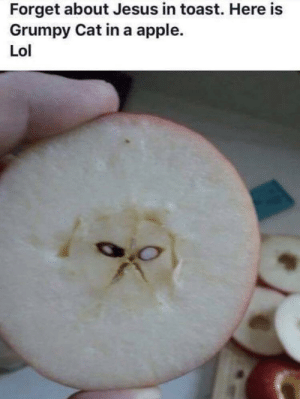 Reincarnation?! by hammerkat605 MORE MEMES: Forget about Jesus in toast. Here is  Grumpy Cat in a apple.  Lol Reincarnation?! by hammerkat605 MORE MEMES