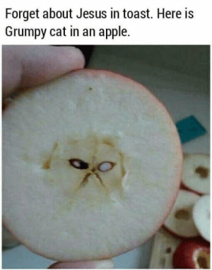 grumpy: Forget about Jesus in toast. Here is  Grumpy cat in an apple.