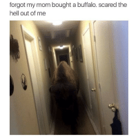 Buffalo, Hell, and Mom: forgot my mom bought a buffalo. scared the  hell out of me Silly me almost forgot it
