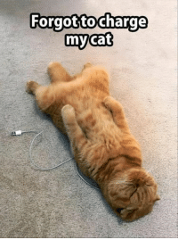 Cats, Caturday, and Funny: Forgottocharge  my cat Have a great Caturday!  #cats # cat memes # funny memes # Caturday # Caturday memes