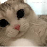 9gag, Cute, and Dank: forno.the.cat IG Paw fetish  via 9GAG Cute