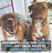 Picasso is perfectly imperfect ❤️❤️ @luvabledogrescue: FORTUNATELY FOR THIS BONDED  PAIR  THEY WERE SAVED BY Picasso is perfectly imperfect ❤️❤️ @luvabledogrescue