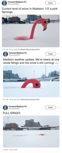 Soccer, Pink, and Snow: Forward Madison FC  Follow  Current level of snow in Madison: 1/2 a pink  flamingo  0:17 AM-25 Jan 2019 from Breese Stevens Soccer Field  Forward Madison FC  OForwardMSNFC  Follow  Madison weather update: We're nearly at one  whole Mingo and the snow's still coming!  8:41 AM-28 Jan 2019 from Breese Stevens Soccer Field  Forward Madison FC  Follow  FULL MINGO!  PMA-28 Jan 2019 my new favorite unit of measurement