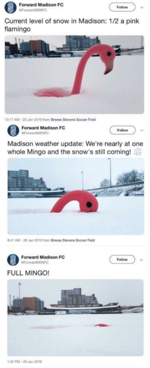 my new favorite unit of measurement by concealed_weapon MORE MEMES: Forward Madison FC  Follow  Current level of snow in Madison: 1/2 a pink  flamingo  0:17 AM-25 Jan 2019 from Breese Stevens Soccer Field  Forward Madison FC  OForwardMSNFC  Follow  Madison weather update: We're nearly at one  whole Mingo and the snow's still coming!  8:41 AM-28 Jan 2019 from Breese Stevens Soccer Field  Forward Madison FC  Follow  FULL MINGO!  PMA-28 Jan 2019 my new favorite unit of measurement by concealed_weapon MORE MEMES