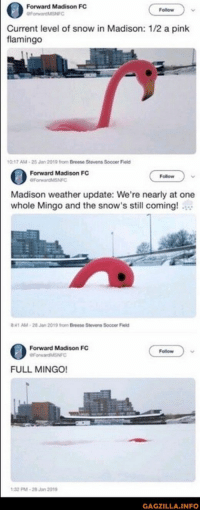 75 Random Pictures Of The Day: Forward Madison FC  Follow  urrent level of snow in Madison: 1/2 a pink  flamingo  0-17 AM-25 Jan 2019 from Breese Stevens Soccer Field  Forward Madison FC  Follow  Madison weather update: We're nearly at one  whole Mingo and the snow's still coming!  41 AM-28 Jan 2019 from Breese Stevens Soccer Field  Forward Madison FC  Follow  FULL MINGO!  32 M-28Jan 2019  GAGZILLA.INFO 75 Random Pictures Of The Day