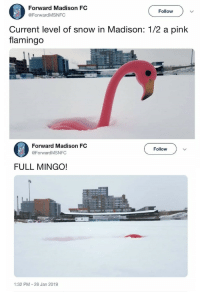 awesomacious:  metric system? measuring by feet? sorry, I only measure by flamingoes: Forward Madison FC  @ForwardMSNFC  Follow  Current level of snow in Madison: 1/2 a pink  flamingo  Forward Madison FC  @Forward MSNFC  Follow  FULL MINGO!  1:32 PM 28 Jan 2019 awesomacious:  metric system? measuring by feet? sorry, I only measure by flamingoes