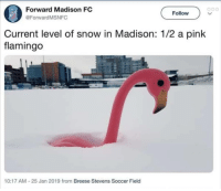 Fullmingo: Forward Madison FC  @ForwardMSNFC  o00  Follow  Current level of snow in Madison: 1/2 a pink  flamingo  10:17 AM-25 Jan 2019 from Breese Stevens Soccer Field Fullmingo
