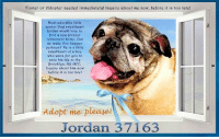Animals, Desperate, and Dogs: foster or fldopter ngeded immediatelg! Inquirg about me now, before it is too latel  Most adorablg little  sgnior Pug swggthgart  Jordan woald lovg to  find a ngw forgvgr  rgtirgmgnt homg. Can  wg makg this happen  perhaps? tlg is s little  swgethgart of a bog  who wails for gou to  savg his lifg at thg  Brooklgn. Ny fiCC.  Inquirg about him now  bgforg it is too latg  Adopt me please  Jordan 37163 **Adopter or Foster needed ASAP**  NYC - **THIS pup NEEDS us NOW** Most adorable little senior Pug sweetheart Jordan would love to find a new forever retirement home. Can we make this happen perhaps? He is a little sweetheart of a boy who waits for you to save his life at the Brooklyn, NY ACC. Inquire about him now before it is too late!  ✔Pledge✔Tag✔Share✔Foster✔Adopt✔Save his life!  ****************************************** To FOSTER or ADOPT,  SPEAK UP NOW & Save a Life:  Direct Adopt from the ACC  Or Apply with rescues  Or Message Must Love Dogs - Saving NYC Dogs for assistance!!! ****************************************** The general rule is to foster you have to be within 4 hours of the NYC ACC approved New Hope partner rescues you are applying with and to adopt you will have to be in the general NE US area; NY, NJ, CT, PA, DC, MD, DE, NH, RI, MA, VT & ME (some rescues will transport to VA).  =================================  Jordan 37163 Small Mixed Breed: Pug  Sex male Age 10-13 yrs (approx.) Weight 25 lbs My health has been checked.  My vaccinations are up to date. My worming is up to date.  I have been micro-chipped.  I am waiting for you at the Brooklyn, NY ACC. Please, Please, Please, save me! ... NOTE: *** WE HAVE NO OTHER INFORMATION THAN WHAT IS LISTED WITH THIS FLYER *** ... – please email Adopt@NYCACC.org for additional info - SUBJECT Line: Enter animal ID number and the shelter location - Don't forget to add your email address and phone numbers where they can reach you to your email as well. ...  RE: ACC site Just because 
