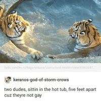 Cats, Dogs, and Memes: fotki yandex.ru/tags/kowi Mlusers/svet-mister view/698368?  keranos-good-of-storm-crows  two dudes, sittin in the hot tub, five feet apart  cuz theyre not gay my friend told me today that lions look more like dogs than cats @ first i was like yeah no but now i'm kinda like ..... i see it