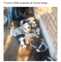 Memes, Heart, and Home: Found a little surprise at home today... My heart just stopped 😍 Credit: @greenvalleyaussies