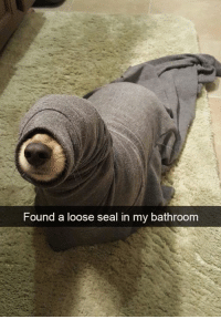 Seal: Found a loose seal in my bathroom