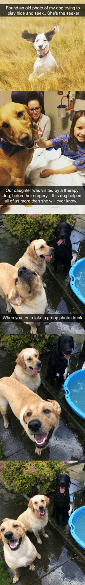 animalsnaps:Dog snaps: Found an old photo of mv doa trving tO  play hide and seek.. She's the seeker   Our daughter was visited by a therapy  dog, before her surgery... this dog helped  all of us more than she will ever know   When you try to take a group photo drunk animalsnaps:Dog snaps