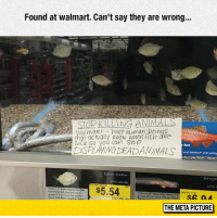 """srsfunny:Advice For Walmart: Found at walmart. Can't say they are wrong...  STOD KILLING AMMALS  aimat hie hwman beinas  Qt actually wow when fisn are  DSPLAVING DEADANINALS  SICK So you Can Stop  Barb  Tetra Safetart"""" when adding  Silver Dollar  Drago  UPC BO190  UPC  