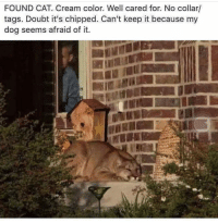 """Tumblr, Blog, and Http: FOUND CAT. Cream color. Well cared for. No collar/  tags. Doubt it's chipped. Can't keep it because my  dog seems afraid of it. <p><a href=""""http://lolsupport.tumblr.com/post/150728820097/meow"""" class=""""tumblr_blog"""">lolsupport</a>:</p>  <blockquote><p>Meow.</p></blockquote>"""
