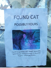 """Chicken, Quite, and Answer: FOUND CAT  POSSIBLY YOURS  Found 12 December 2011. Middle aged tabby,  quite nervous. Seems to answer to the name  """"fingers"""". Tasted like chicken. <p>Fingers.</p>"""
