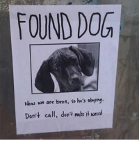 Don't make it weird | More 👉 @miinute: FOUND DOG  Now we are bros, so he's staying.  Don't call, don't make weld Don't make it weird | More 👉 @miinute