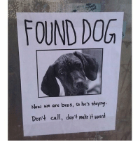 """FOUND DOG  Now we are bros, so he's staylng  Don't call, don't make it werd Best, """"found dog,"""" ad I have seen anywhere. (via: reddit-I-AM-Canadian-Eh)"""