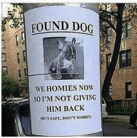 @thetinderblog this is something I'd do. I'm obsessed with pups. Follow @thetinderblog for more cute puppy posts along with hilarious posts @thetinderblog: FOUND DOG  WE HOMIES NOW  SO PM NOT GIVING  HIM BACK  dIESSAFE, DON'T WORRI) @thetinderblog this is something I'd do. I'm obsessed with pups. Follow @thetinderblog for more cute puppy posts along with hilarious posts @thetinderblog