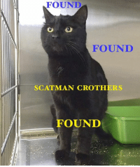 "FOUND ON 43 STREET - Posted by Lethbridge Shelter on Monday, March 13th/2017: - FOUND - "" *Scatman Crothers* is a Shining example of a Cat running his Paw Paws off. He was found on 43rd Street, stunned from being struck by a vehicle, but amazingly, is not injured. He had no ID for his owners, and has been neutered. This AristoCat no longer has to Stay Hungry, and if not claimed, he will be adopted to a new set of Super Globetrotters."" (If claiming this Kity-Cat, please provide Proof of Ownership, and contact the Lethbridge Shelter ASAP at: 2405 - 41 Street North, Phone: 403-320-4099) >Link to Shelter Post: https://www.facebook.com/lethbridgeanimalservices/photos/a.1634824113195886.1073741865.559910924020549/1886712108007084/?type=3&permPage=1 ----------------------- Lethbridge and District Humane Society No-Kill Animal Association (Lethbridge) Family Pet Hospital & 24 Hour Pet Emergency Centre Last Chance Cat Ranch Lethbridge Lethbridge PAW Society Purrfect Endings Rescue Society: FOUND  FOUND  SCAT MAN CROTHERS  FOUND FOUND ON 43 STREET - Posted by Lethbridge Shelter on Monday, March 13th/2017: - FOUND - "" *Scatman Crothers* is a Shining example of a Cat running his Paw Paws off. He was found on 43rd Street, stunned from being struck by a vehicle, but amazingly, is not injured. He had no ID for his owners, and has been neutered. This AristoCat no longer has to Stay Hungry, and if not claimed, he will be adopted to a new set of Super Globetrotters."" (If claiming this Kity-Cat, please provide Proof of Ownership, and contact the Lethbridge Shelter ASAP at: 2405 - 41 Street North, Phone: 403-320-4099) >Link to Shelter Post: https://www.facebook.com/lethbridgeanimalservices/photos/a.1634824113195886.1073741865.559910924020549/1886712108007084/?type=3&permPage=1 ----------------------- Lethbridge and District Humane Society No-Kill Animal Association (Lethbridge) Family Pet Hospital & 24 Hour Pet Emergency Centre Last Chance Cat Ranch Lethbridge Lethbridge PAW Society Purrfect Endings Rescue Society"