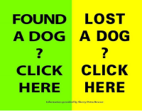 """Billboard, Butt, and Church: FOUND LOST  A DOG A DOG  CLICK CLICK  HERE  HERE  Information provided by Sherry Petta Rescue SECTION ONE:  Steps to take to find your lost dog  and scroll down for  SECTION TWO:  Steps to find a dog's owner  - - -  ~~~~SECTION ONE ~~~~ If you lost your dog:  To find your dog, please utilize these resources as QUICKLY as possible.   If your dog just got out, the two most important things to do are:  Post flyers.. and  Please post in BOTH the """"lost & found"""" section AND the """"pets"""" section on craigs list.  Please make sure it says """"LOST"""" in your ad title. Also check both sections daily for your pet. USE THIS LINK: http://phoenix.craigslist.org/ ~~then click """"post to classifieds"""" Then under the Community heading, -- post in Pets Then make another ad in under the Community heading, -- post in Lost & Found    Be sure to post photos because many volunteers try to help match lost dogs with found dogs.   Include in your craigslist ad the DATE your dog got lost (i.e. not """"Thursday"""" not """"yesterday"""" but include the date, or """"today 3/15"""" for example).  Also include the location (nearest main intersection).   Put your dog's bed, blanket, and even some of your clothing, shoes, outside your front door.  The scent may help bring your dog home.  If you live in an HOA community, contact your board or property management company and ask them to do an email blast to homeowners.   Please register your lost dog at, and check daily:          http://www.petharbor.com/  Important:  When looking on the petharbor website, once you've finished viewing the search results, look further for """"search pets found by public.""""    Also important sites to check daily:       https://twitter.com/NoLostPetsMC (lists stray dogs picked up)      http://gis.maricopa.gov/mapapp/animalcarecontrol/stray/index.html (shows dogs and location picked up in the last 3 days)        http://www.azhumane.org/      http://www.pawsaz.org/foster-and-adoption/       HALO Rescue Available Dogs (taken """
