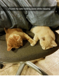 Cats, Napping, and Paws: Found my cats holding paws while napping