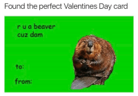 Found the perfect Valentines Day card  r u a beaver  cuz dam  from: Tag your Valentine @chaos.reigns_